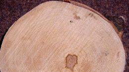Ahorn - helles Holz