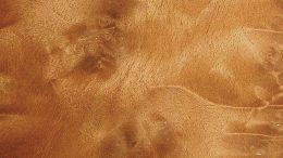 Walnuss Holz mit typischer Knollenmaserung