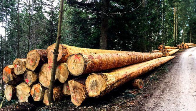 Schutz bei der Holzernte