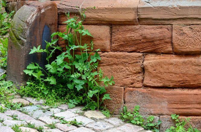 Fliesen und Naturstein: Sandstein lässt sich auch hervorragend im Garten einsetzen.