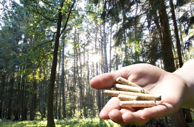 Pellets aus gepressten Holzresten