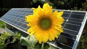 Solaranlage und symblolisch - eine Sonnenblume