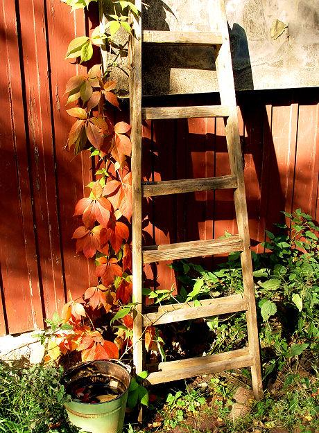 Die Leiter zum Obst pflücken