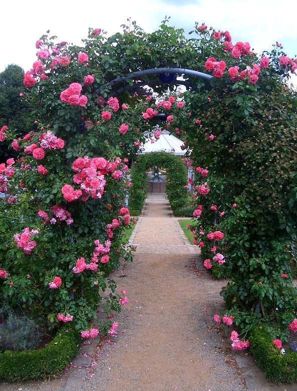 Rosenbogen Gang im Garten - durch mehrere Rosenbögen hintereinander