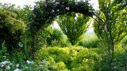 Schöner Rosenbogen im Garten