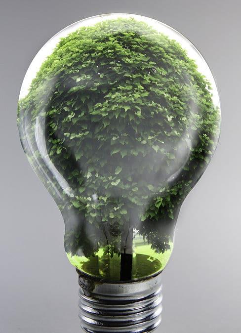 Licht und Schatten und Chlorophyll