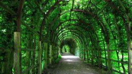 Pergola - klassischer Laubengang im Garten des Schweriner Schlosses