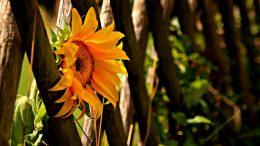Ein Zaun aus Holz fügt sich besonders leicht in die Gartengestaltung ein.