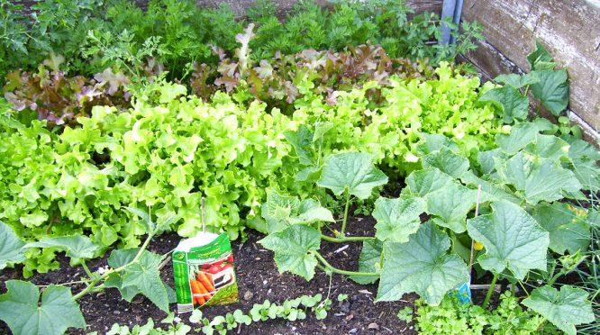 Hochbeet selbst bauen und Gemüse und Kräuter leichter ernten