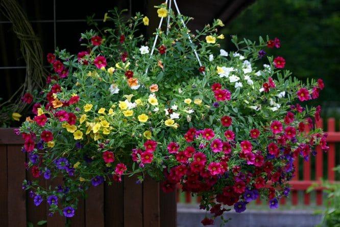 Blumenampel in voller Pracht