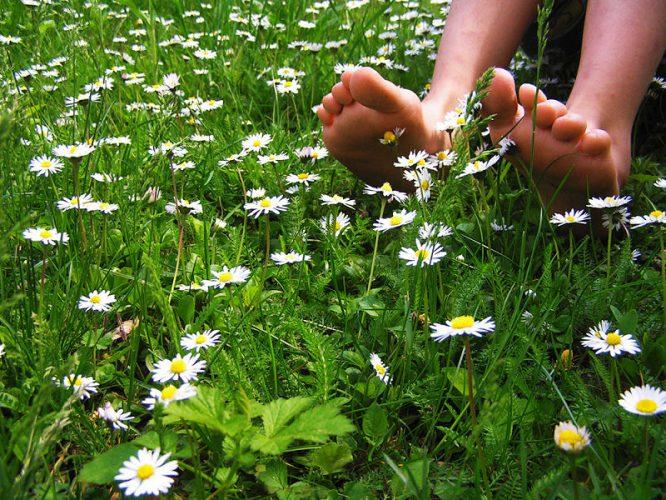Rasen mit Gänseblümchen