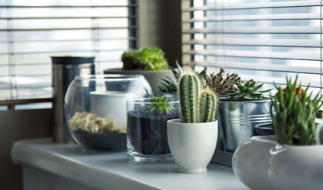 Eine individuelle Wohnung haben Sie mit einer schönen Fensterbank quasi schon automatisch.