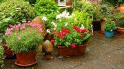 Eine Überdachung der Terrasse macht auch mit Kübelpflanzen Sinn