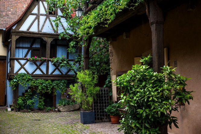 Überall Pflanzen in diesem grün gestalteten Innenhof