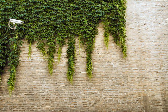 Von Außenwänden kennen Sie eine komplette Begrünung durch Weinreben, Efeu & Co sicherlich. Für Innenräume dagegen ist dieser Trend relativ neu.