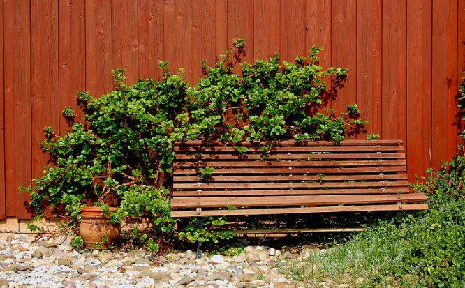 Bank in romantischer Ecke des Gartens