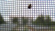 Insekten in der Wohnung - nein danke!