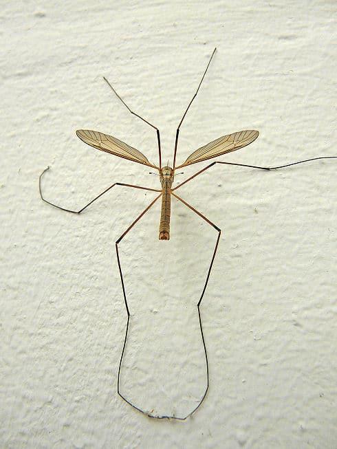 Insekten in der Wohnung - lieber nicht, Mücken schon gar nicht.