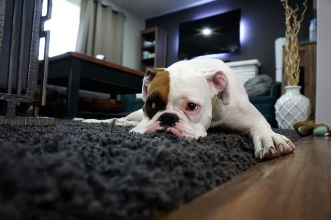 Brandflecken entfernen vom guten Teppich ist schon sinnig, denn meist sind Brandflecken sogar Löcher im Teppich