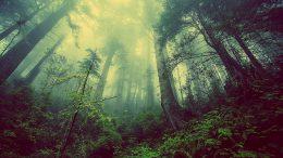 Klima schonendes Heizen mit Holz