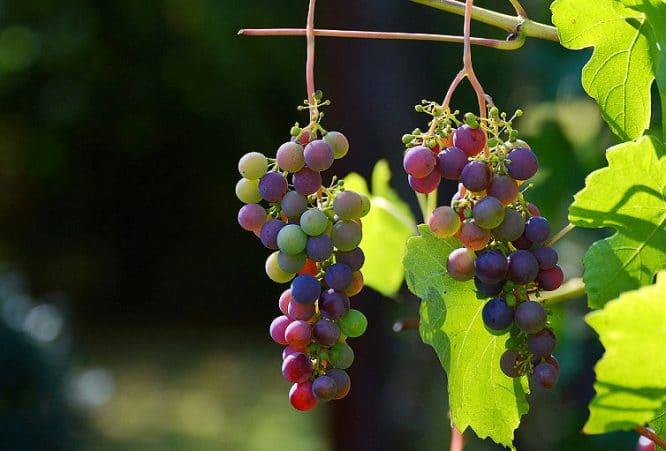 Der Aufbau einer Tropfbewässerung empfiehlt sich zum Beispiel beim Weinbau.