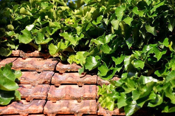 green rofe - ein Dach mit Pflanzen begrünen