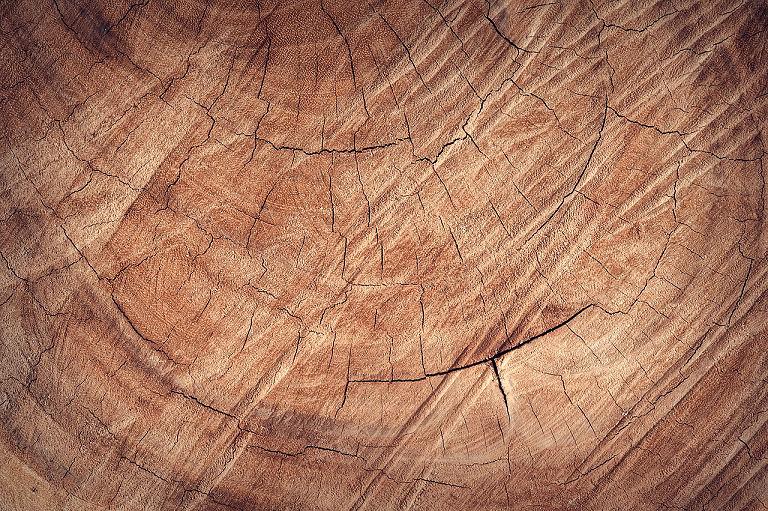 Eigenschaften von Holz: Eiche ist ein schweres und strapazierfähiges Holz.