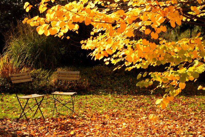 Im Herbst wird es Zeit, den Garten winterfest zu machen.
