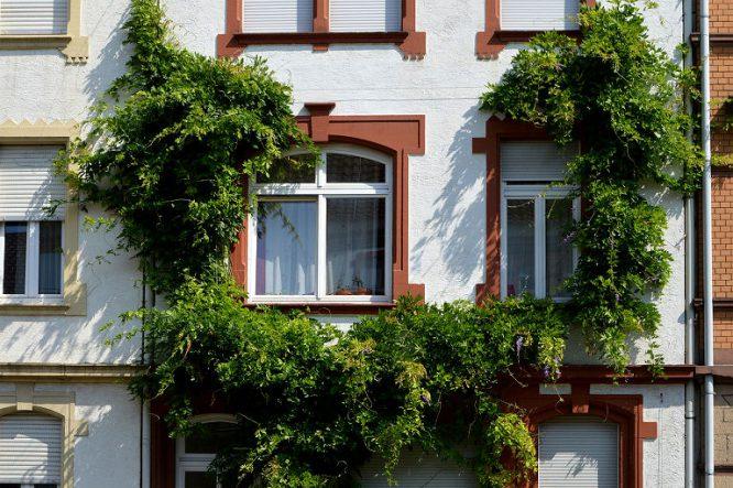 Schöne Fassaden sind gepflegt und gern auch begrünt.