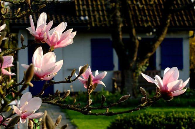 Gartenhaus mit Magnolien