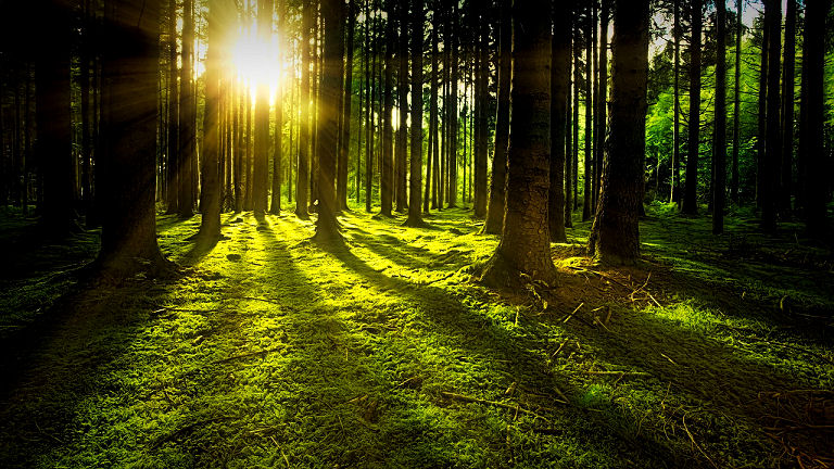 Erst Licht und Schatten zusammen macht eine Lichtgestaltung möglicht.