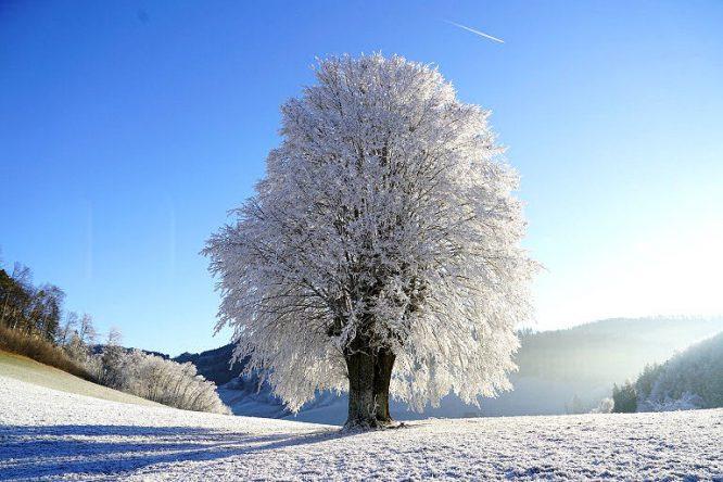 Grashalme frieren im Winter ein - so denn Frost ist, nicht aber die Wurzeln des Rasen.