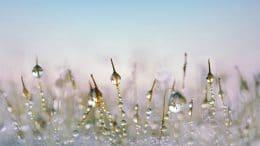 Der Rasen im Winter - braucht Luft und Licht.