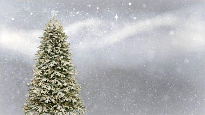 Funktionales Licht - beim Weihnachtsbaum im Garten.