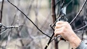 Warme Hände beim Baumschnitt sind schon wünschenswert.