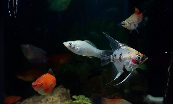 In einem Aquarium sollen sich alle Fische wohl fühlen können.