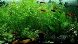 Ein Aquarium umsichtig aufbauen - dass Ihr Fische sich wohl fühlen.