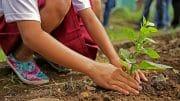 Tipps für den perfekten Garten