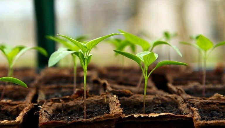 Gartenarbeit ist Freude am Wachsen