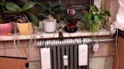 Die relative Luftfeuchtigkeit kann durch Verdunster und auch durch Zimmerpflanzen erhöht werden.