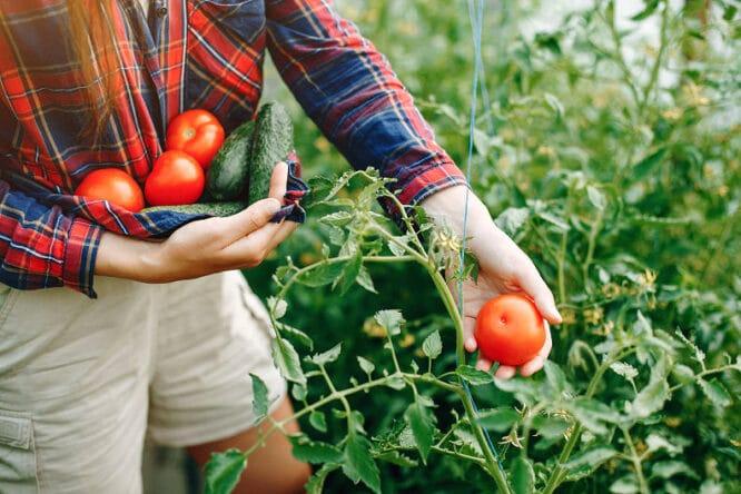 Vorteile eines Gartenheims gibt es viele - frisches Gemüse in Reichweite ist einer von ihnen.