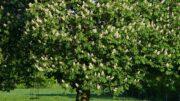 Bäume und Sträucher pflanzen - ein Kastanienbaum spendet angenehm kühlen Schatten im Sommer.