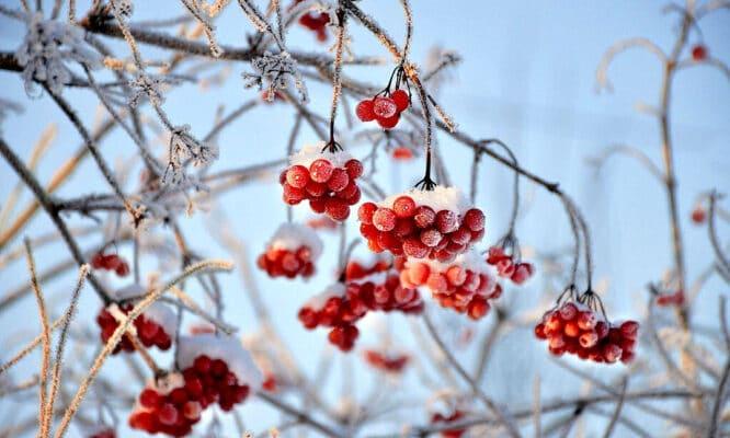 Den Garten rechtzeitig auf den Winter vorbereiten - dann kann man ihn im Winter sogar ein wenig genießen.